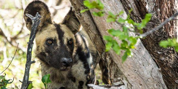 selous-national-park-1400×700